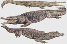 Concept Alligators and Crocodiles