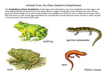 Concept Amphibian Classification