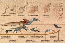 Concept Bird Evolution