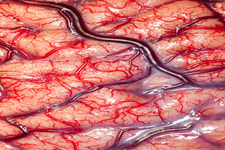 Concept Blood Vessels