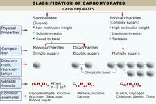 Concept Carbohydrate Classification