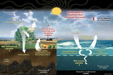 Concept Carbon Cycle and Climate