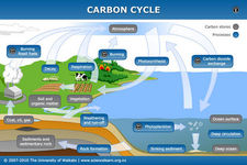 Concept Carbon Cycle