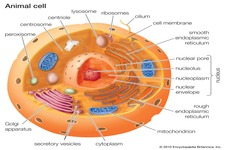 Concept Cell Biology