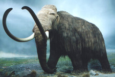 Concept Cenozoic Era - The Age of Mammals
