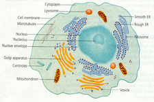 Concept Common Parts of the Cell