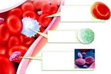 Concept Components of Blood