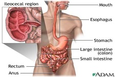 health information digestive diseases