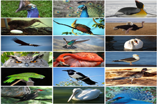 Concept Diversity of Birds