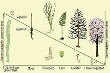 Concept Evolution of Plants