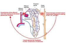 Concept Excretory System Diseases