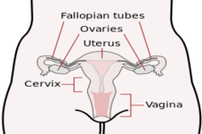Concept Female Reproductive Development