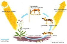Concept Flow of Matter in Ecosystems