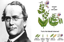 Concept Gregor Mendel and Genetics