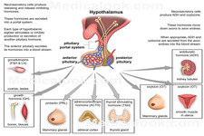 Concept Hormone Regulation