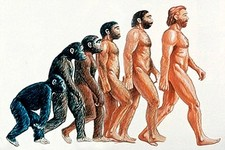 Concept Humans and Primates