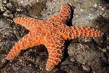 Concept Importance of Echinoderms