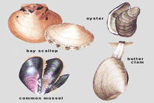 Concept Importance of Mollusks
