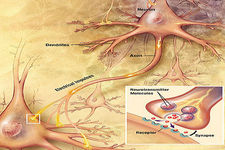 Concept Injuries of the Nervous System