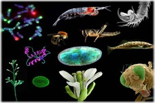 Concept Introduction to Biology