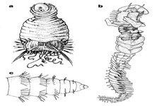 Concept Invertebrate Evolution