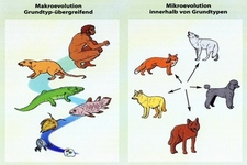 Concept Microevolution and Macroevolution