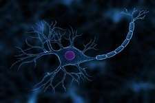 Concept Nerve Cells and Nerve Impulses