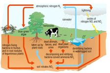 Concept Nitrogen Cycle in Ecosystems