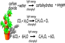 Concept Photosynthesis Reactions
