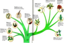 Concept Plant Classification