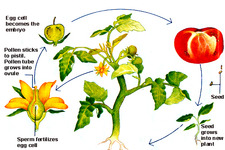 Concept Plant Life Cycle Overview