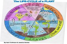 Concept Plant Life Cycles