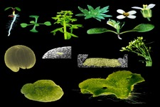 Concept Plant Responses