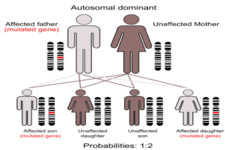 Concept Polygenic Traits