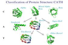 Concept Protein Classification