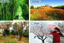 Concept Seasonal Changes in Plants