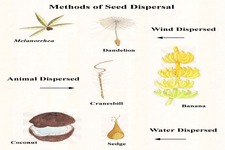 Concept Seeds and Seed Dispersal