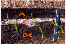 Concept Soil Horizons and Profiles