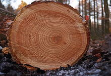 Concept Tree Rings, Ice Cores, and Varves