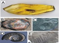Concept Types of Fossilization
