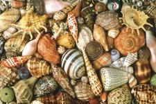 Concept Types of Mollusks