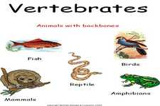 Concept Vertebrate Characteristics