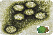 Concept Virus Structures